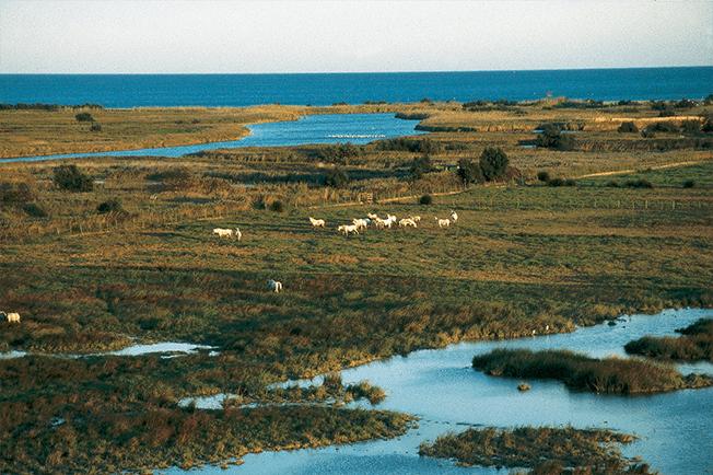 parc national d'Aiguamolls de l'Empordá