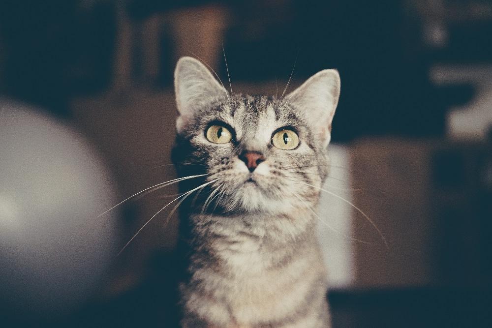 3 conseils pour partir en vacances avec son chat