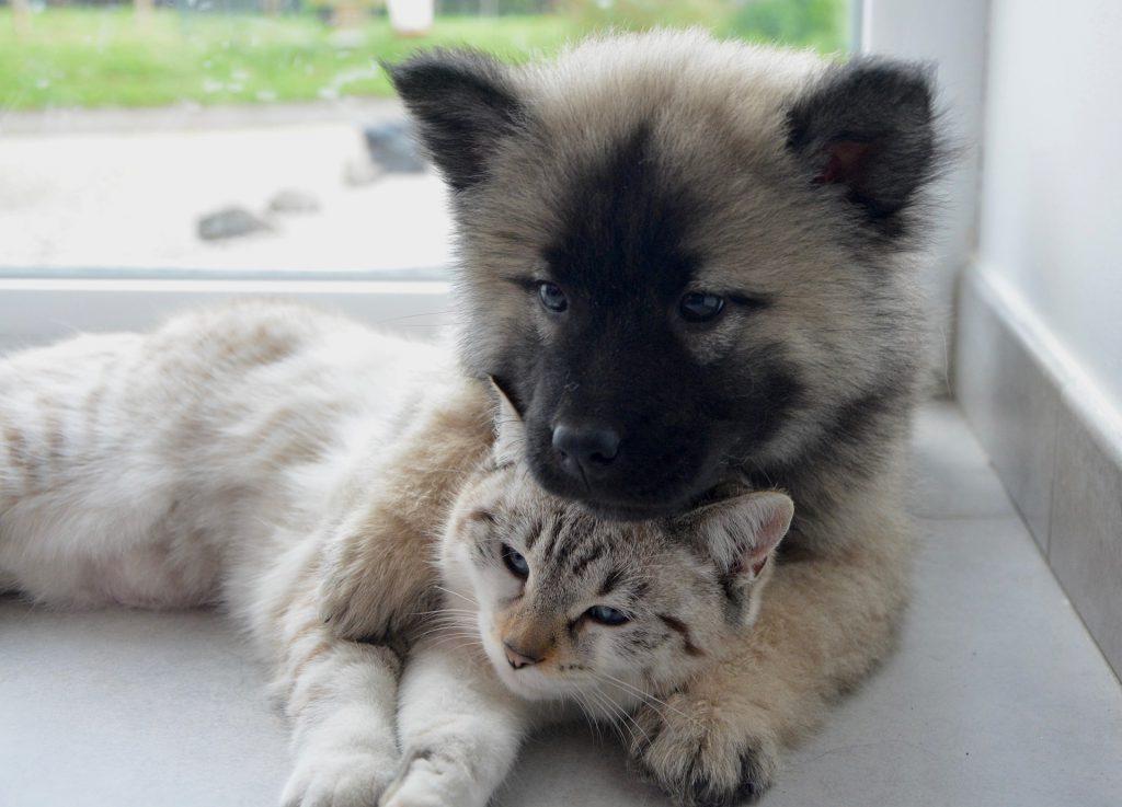 Un chien et chat qui dorment dans les bras l'un de l'autre