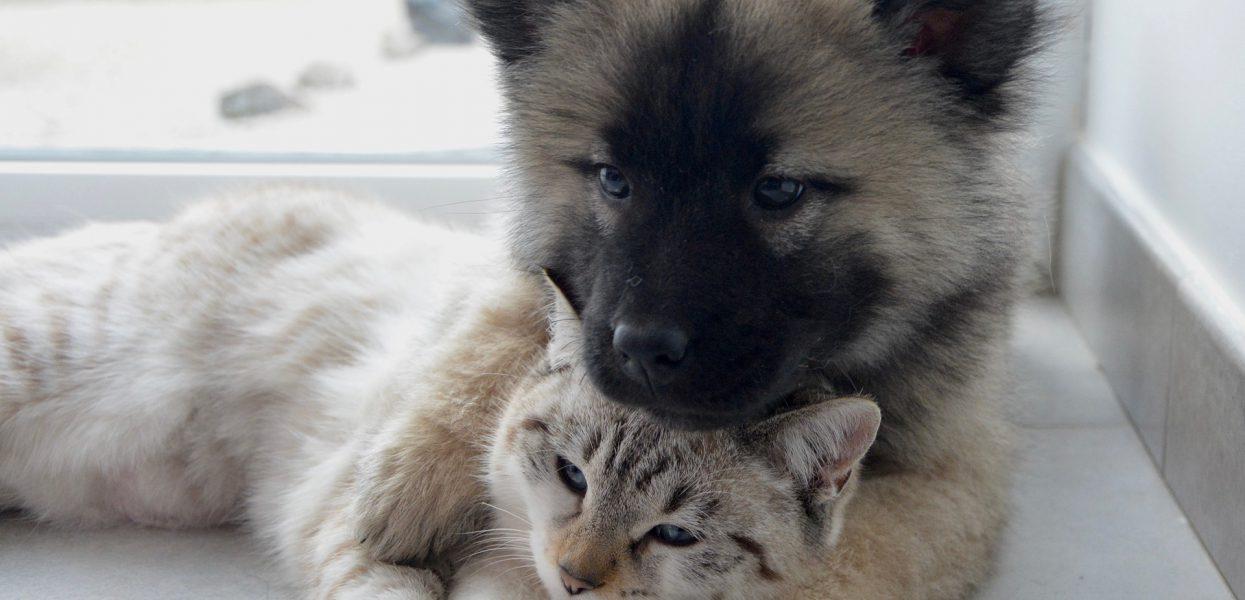 Que faut-il prévoir avant de partir en vacances sans son animal de compagnie ?