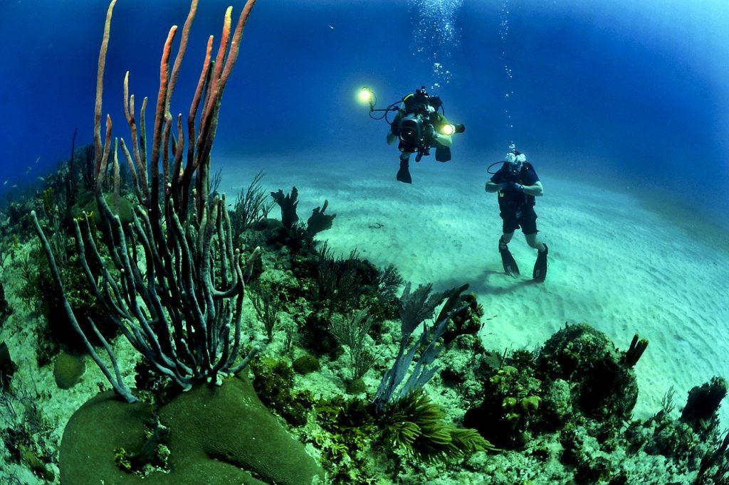 deux plongeurs qui observent des coraux