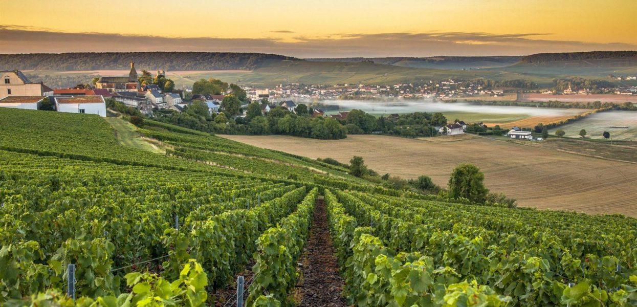 5 bonnes raisons de partir en vacances en Champagne