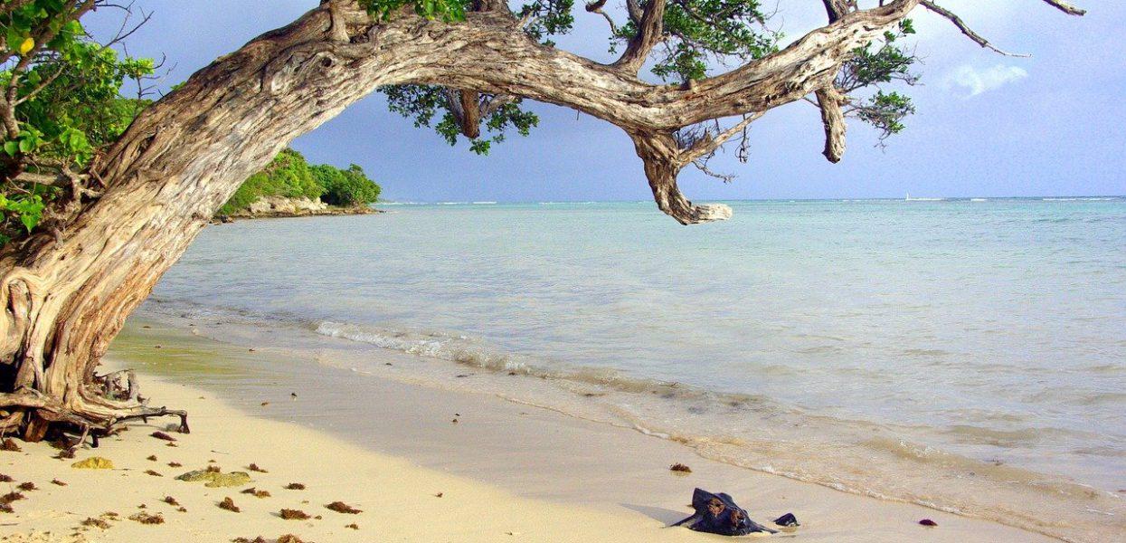 Quel est le mois le moins cher pour partir en Guadeloupe ?