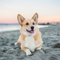 [VACANCES] Où puis-je aller avec mon chien ?